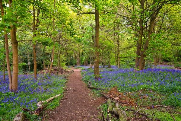 Jones Wood Again by Stephen_B