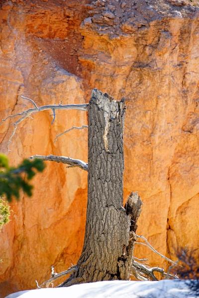 Bryce Canyon by jinstone