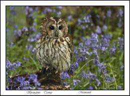 Springtime Tawny