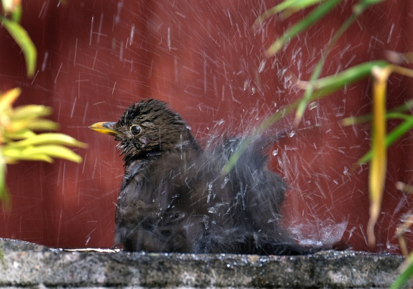 Soggy Bird! by paulbroad