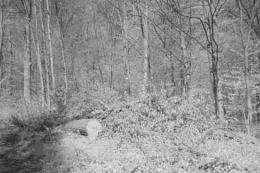 Woodland Way 2.