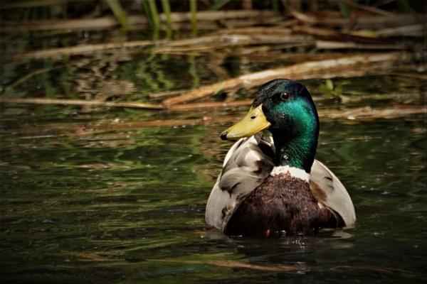 Stop Ducking Around... by SteveH1978