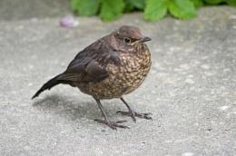 1 of 3 baby B'birds
