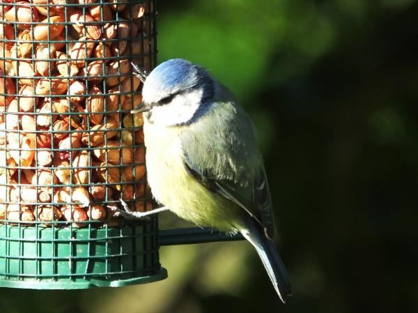Blues Breakfast by ianmoorcroft