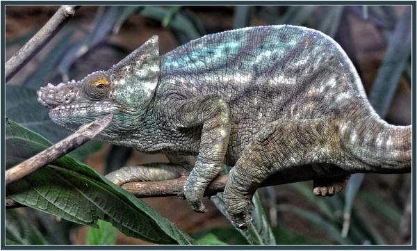 Chameleon by PhilT2