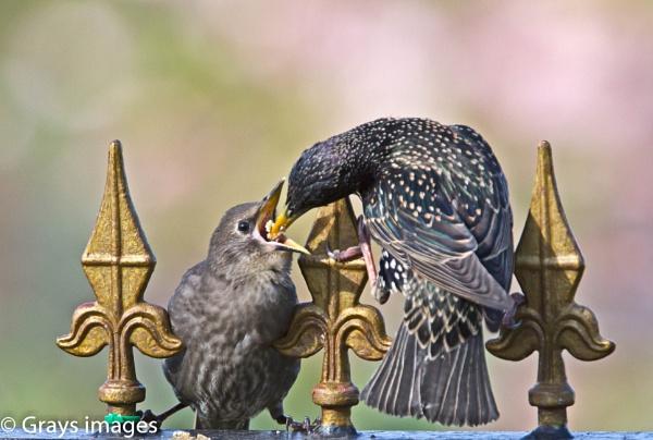 Feeding Time by p147180r