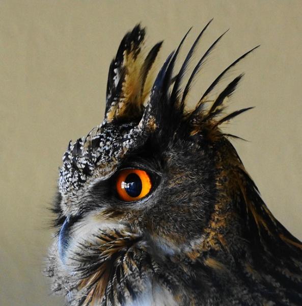 bas new egel owl by christinecilia