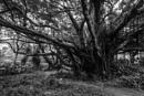 Spooky Tree by JohnnyG