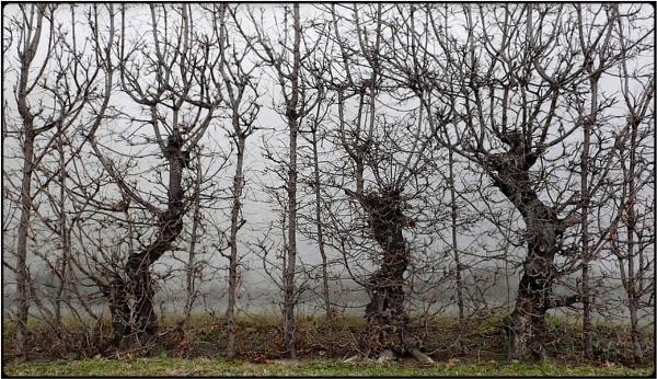 three trees by FabioKeiner