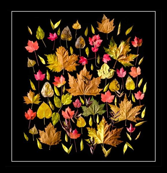Autumn Splash by Prizm