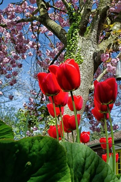 Spring garden by Gillken