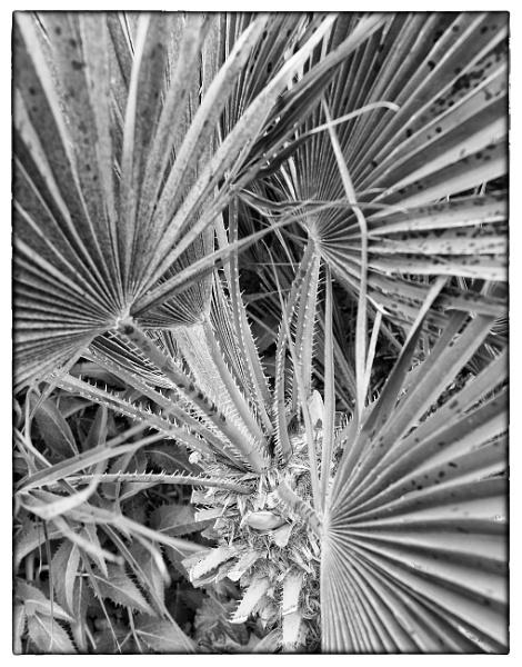 Cactus by NevJB