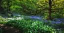 Woodland Splendour
