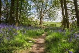 Spring Wood Path