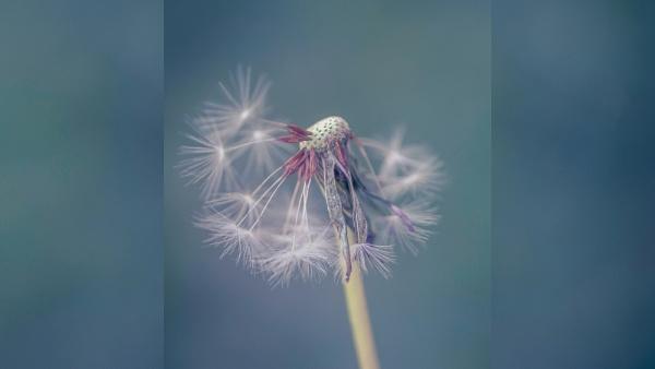 Make a wish by JanetAS