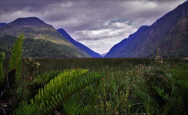 Fern Valley by PentaxBro