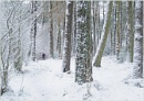 Winter in the Woods by MalcolmM