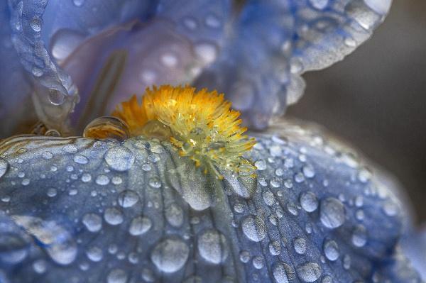 Blue Rain by Zydeco_Joe