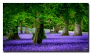 Bluebell Blanket by jer