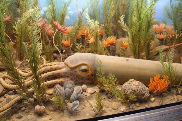 Giant Squid by GardenofEden