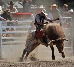 Bulll Riding, Methven Rodeo, New Zealand