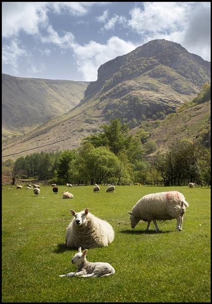 Stonethwaite Springtime..... by Niknut