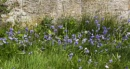 Wild Flower Patch by Irishkate