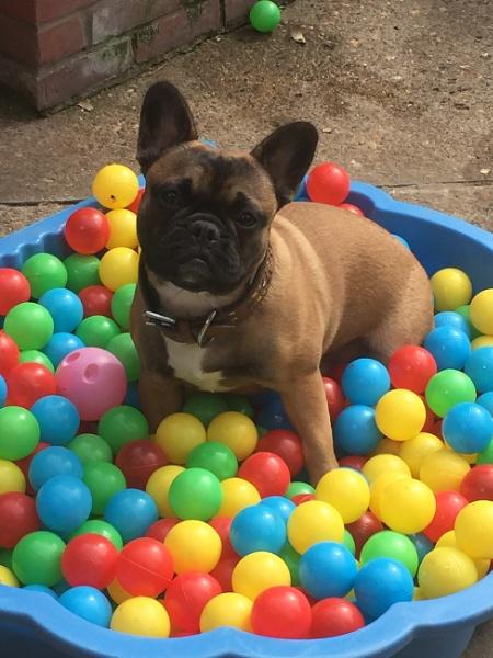 Doggie play time by janiekinns
