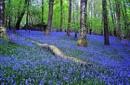 Blue Carpet by stokesy