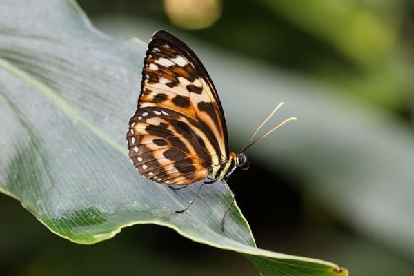 flutterby by vickylou
