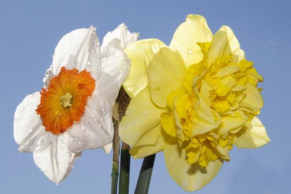 spring flowers by binder1