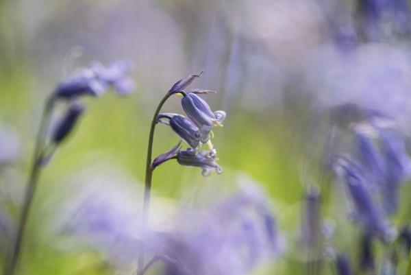Purple Haze by Trevhas