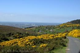 Dublin Mountains (2)
