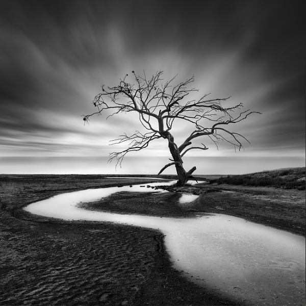 The Crying Tree by Diggeo