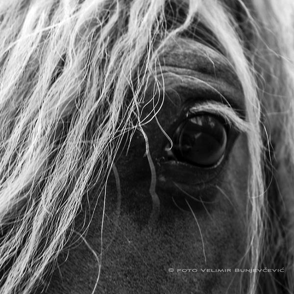 gentleness by Velja