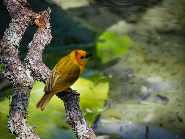 Bird on a Branch by DaveRyder