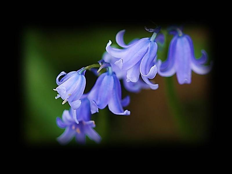 Plumley Flowers