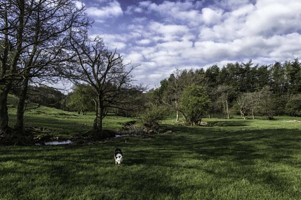 Tree shadows by BillRookery