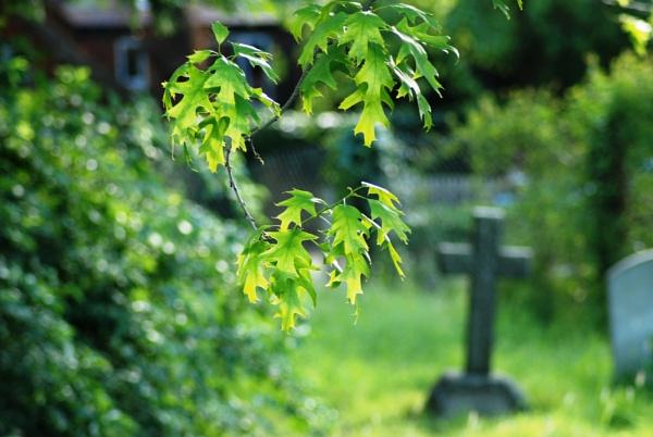 Graveyard life by KrazyKA