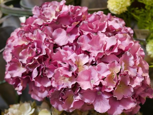 Pink beauty by Ellenismyname65