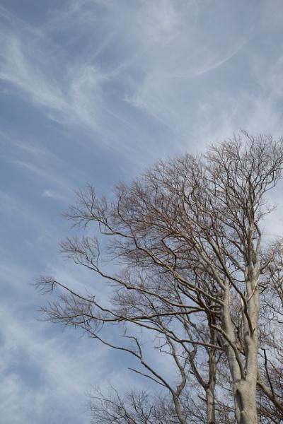 Applecross Trees by Bigpoolman