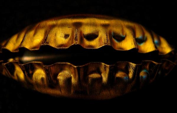 shell by Danas