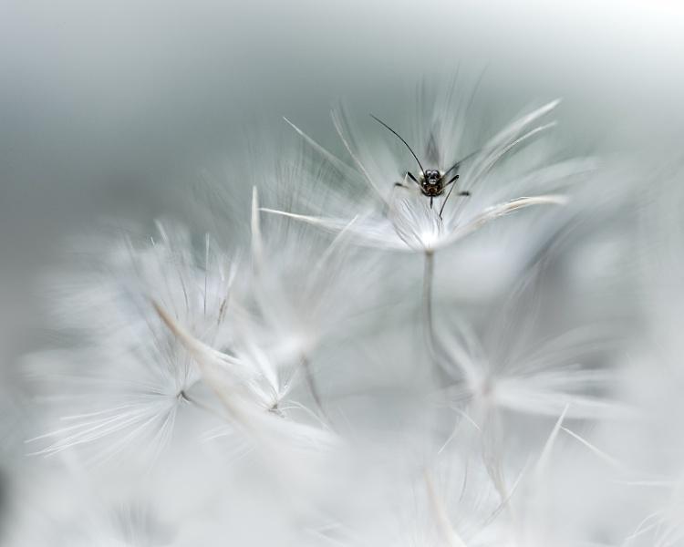 ...tiny mosquito