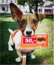 Dog doo - don't! by KingBee