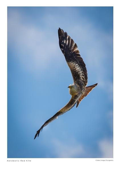Aerobatic Red Kite by running_man