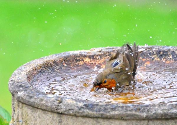 Robins Bath Time by jb_127
