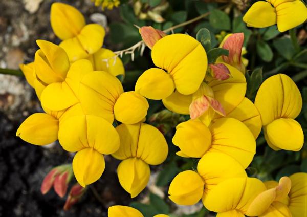 Wild Flower Or Weed ? by badgerwil70
