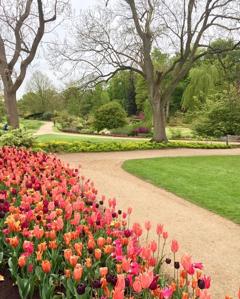 Harlow Carr spring by nicktg