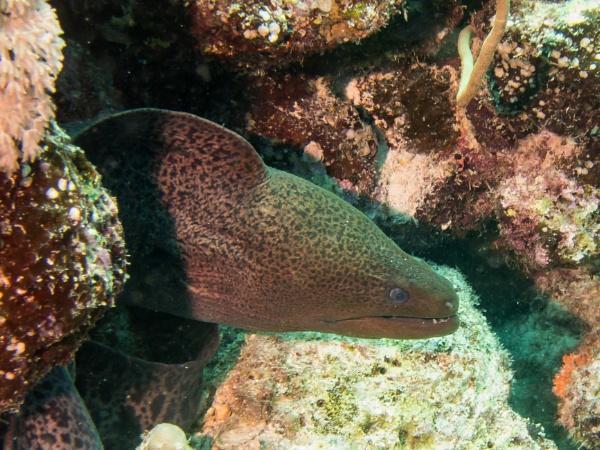 Moray Eel by WorldInFocus