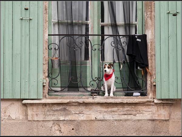 Combien est cette Chienchien dans la Fenetre? by Otinkyad